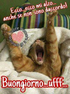 Buongiorno simpatico con gatto