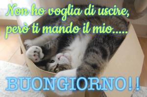 gattino simpatico scatola cucciolo immagini foto nuove gratis 1538405066